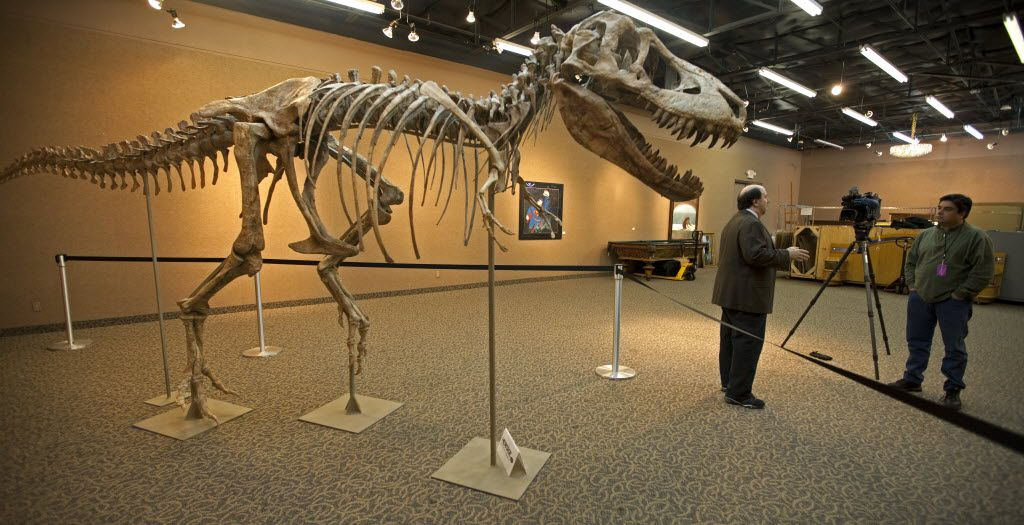 David Herskowitz, director of natural history at Heritage Auctions, talks to a reporter about the 12-foot tall, 23-foot long complete Tyrannosaurus bataar, the slightly smaller Asian counterpart to the legendary North American T-Rex.