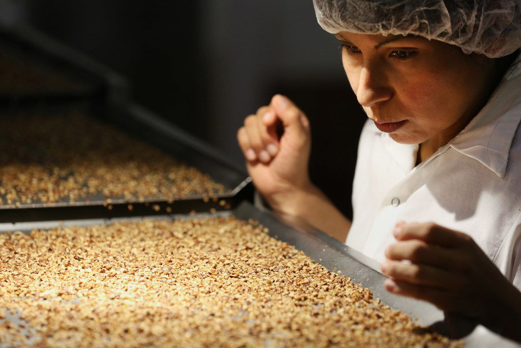 Inspector Maria Torres looks for insect bites, discolorations and remaining shell while examining pecans inside Navarro Pecan Company in Corsicana, Texas Friday October 27, 2017. Navarro Pecan Company is one of the largest pecan producers in the world and was founded in 1977. The pecan is the only commercially produced nut that is native to America. Navarro only uses pecans grown in America. (Andy Jacobsohn/The Dallas Morning News)