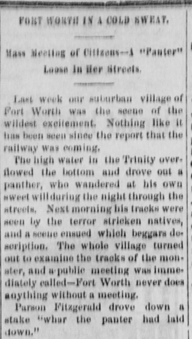 """A column in the Dallas Daily Herald started a story in 1875 that a """"panter"""" had fallen asleep in the middle of downtown Fort Worth. That grew into the nickname of Panther City."""