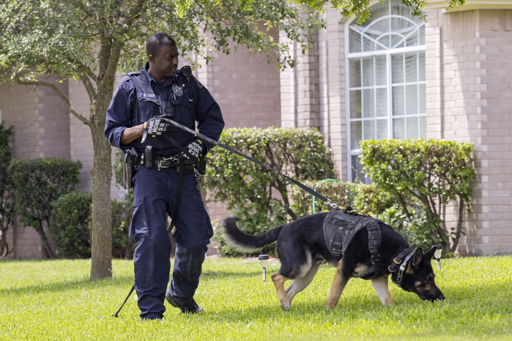 A dog with the Dallas police K-9 unit was put to work around the crime scene Saturday.