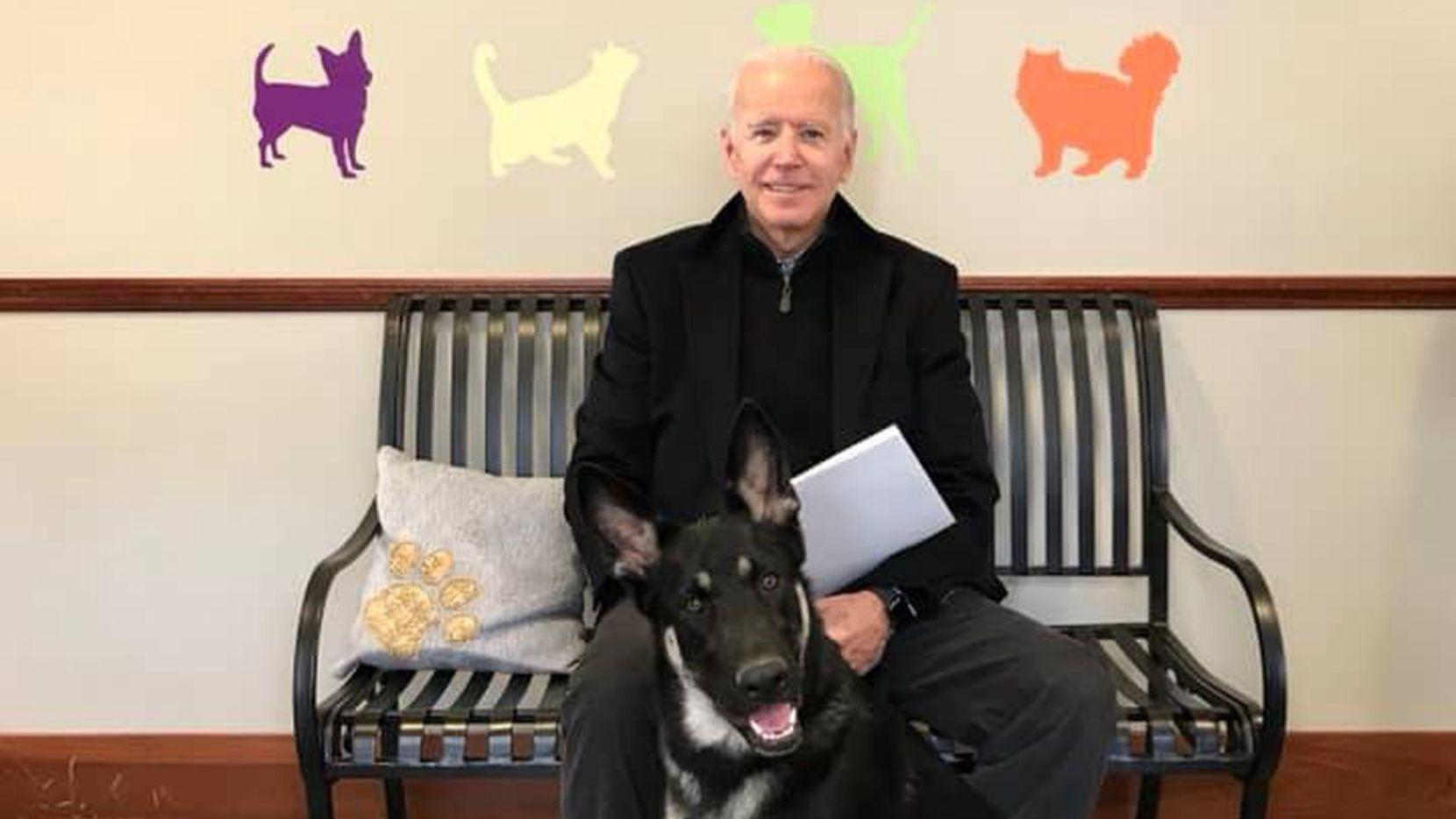 Joe Biden adoptó a Major en 2018. Se trata de un pastor alemán que junto a Champ serán los dos nuevos perros de la Casa Blanca.