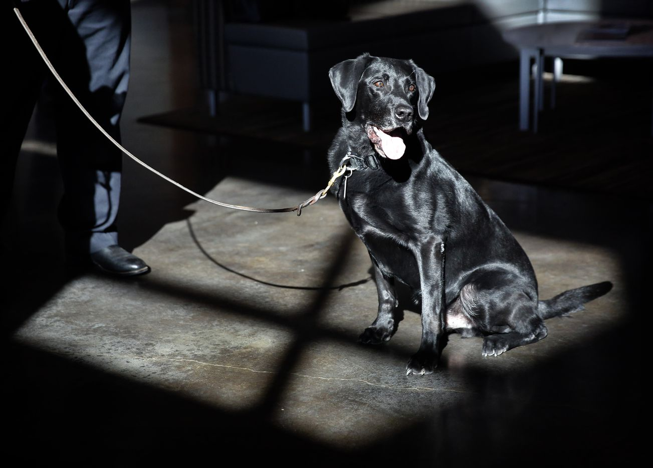 Fort Worth Fire Department's explosive detection K-9, Quigley, was retired Wednesday, January 23, 2019 from the Explosives Detection Unit. His 3 yr-old replacement, Barkevious, was also introduced at the Bob Bolen Public Safety Complex in Fort Worth. Barkevious is the eighth service dog they've had since starting the program in 2011.
