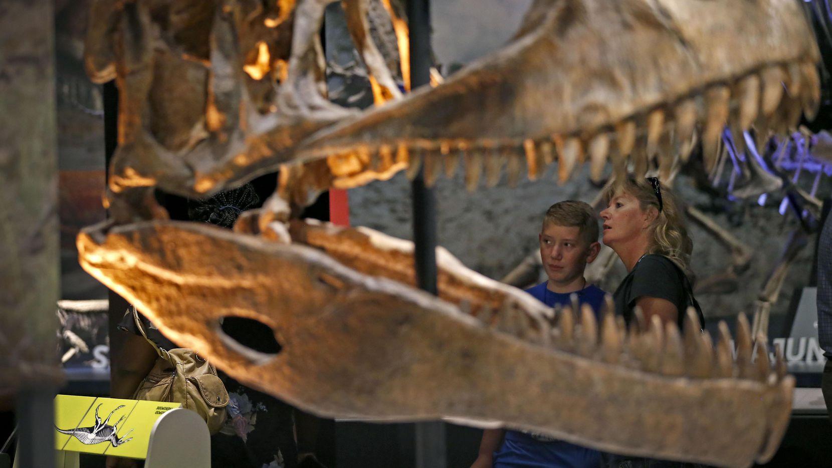 """Dawn Dwyer (der.) y su hijo Jax, de 12 años, miran de cerca a un tiranosaurio, parte de la exhibición """"Ultimate Dinosaurs"""" que se inaugura este sábado.  JAE S. LEE/DMN"""