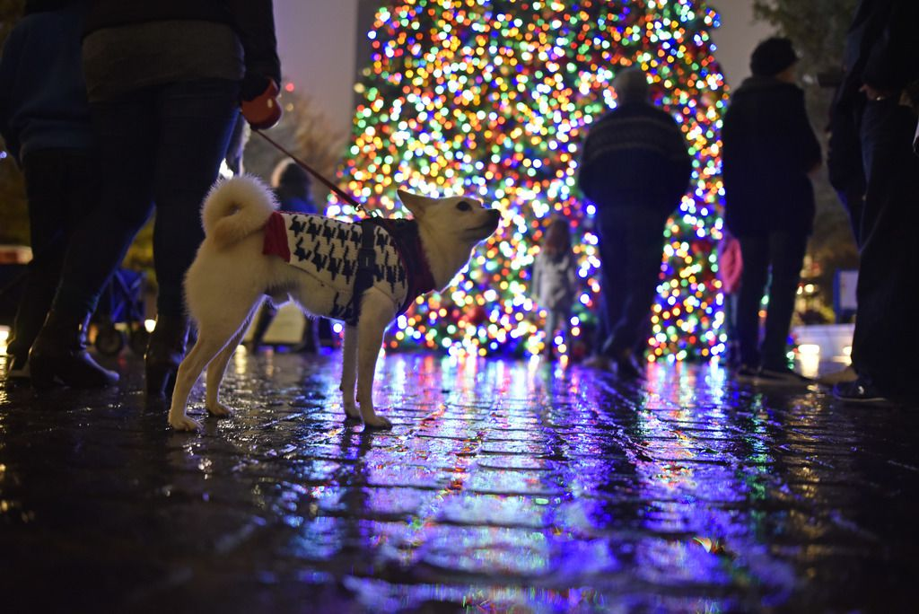 The Ortega family, of Garland, brought their American Eskimo Chihuahua dog named Angel to celebrate the Klyde Warren Park Christmas tree lighting. This year, Klyde Warren Park will host the Boho Market on Dec. 12.