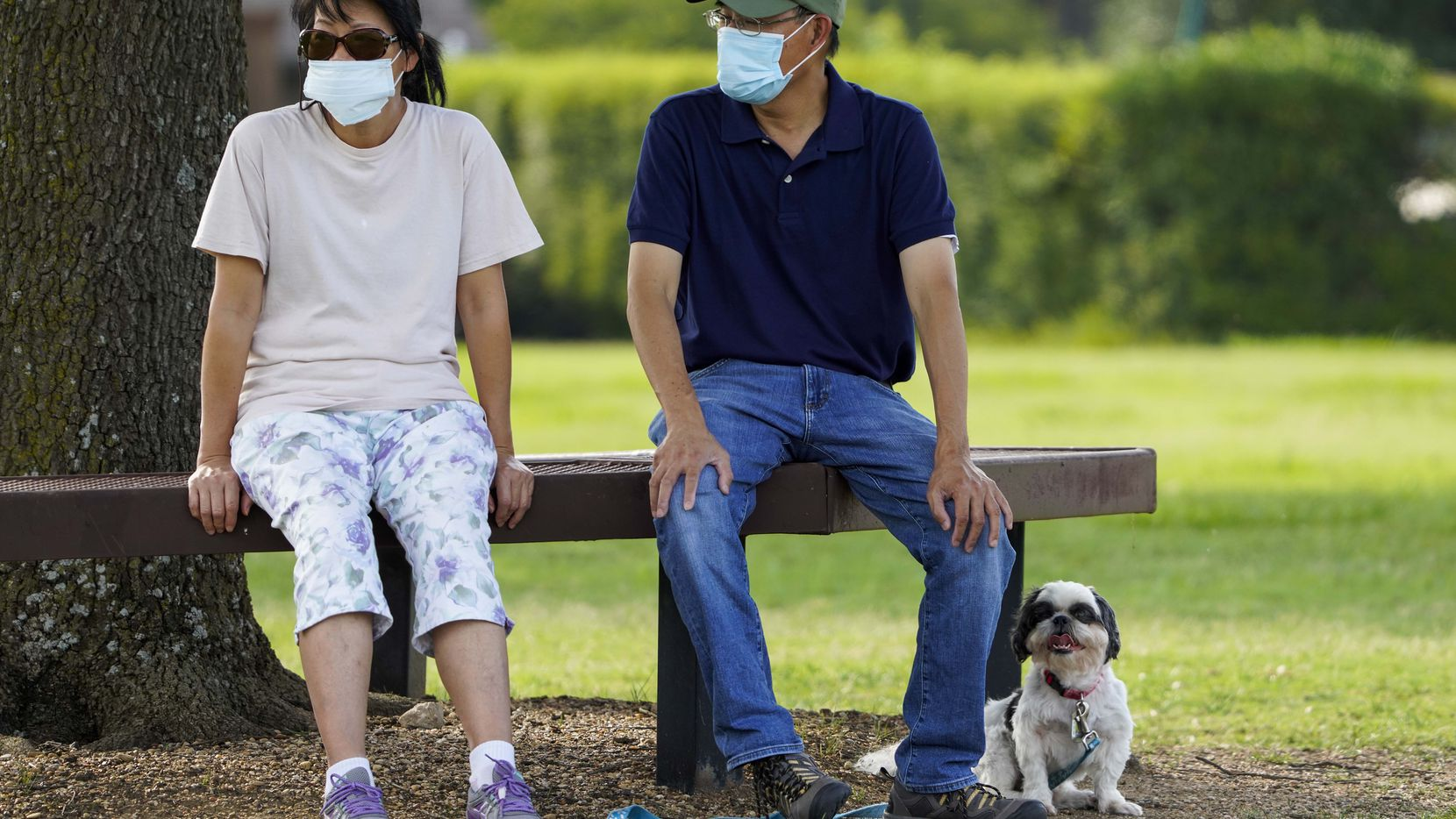 Jeff and Raynette Ho wear face masks as they sit with their dog at Custer Park on Thursday, July 2, 2020, in Richardson, Texas. Gov. Greg Abbott ordered Texas statewide must wear face coverings in public beginning July 3 at noon as cases of the coronavirus surge. (Smiley N. Pool/The Dallas Morning News)