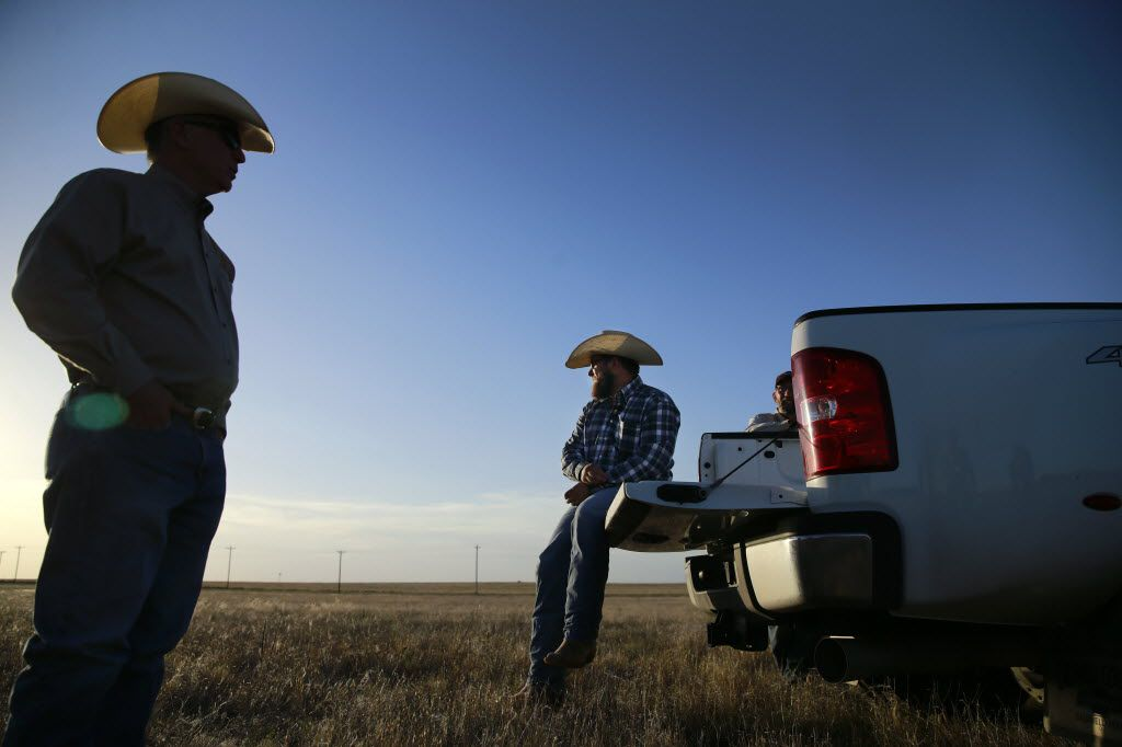 West Texas A&M Agriculture and Natural Sciences Acting Dean Dean Hawkins (left) and ranch manager Landon Canterbury watch as the sun sets on the West Texas A&M University's Nance Ranch where some of the 13 Alpha X Gamma calves were grazing, Wednesday, June 22, 2016. The offspring are from Alpha, a cloned four year old bull and Gamma, a cloned heifer. (Tom Fox/The Dallas Morning News)