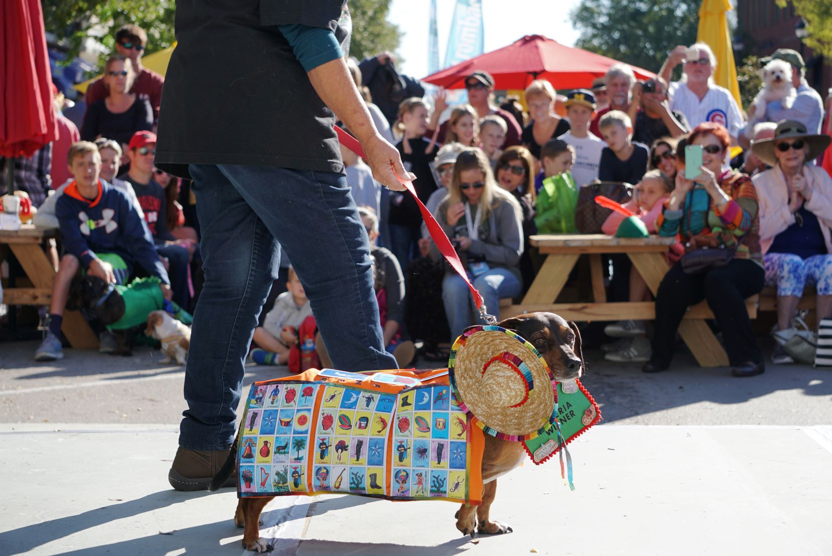 Dress up your dachshund and celebrate Oktoberfest Southlake's 20th anniversary. Besides a costume contest for wiener dogs, owners can see how fast the pooches' little legs can carry them in a dachshund race.