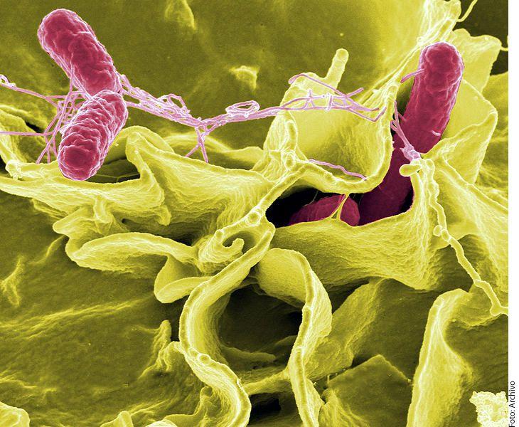 Para finales de los 60, siguiendo con el ejemplo del estafilococo aureus, o estafilococo dorado, se creó una serie de antibióticos, como la meticilina, que eran derivados de la penicilina y resistentes a las enzimas inactivadoras de la misma. (AGENCIA REFORMA)