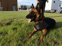 Bullet, seen here at 2 and a half years old, retired from the Grand Prairie Police Department in 2019. Bullet died Friday at age 13.