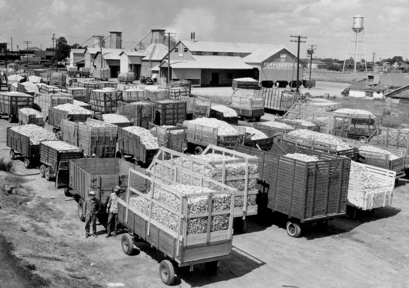 In 1958, farmers with trailers full of cotton line up outside the Forney Cotton Gin, which was then the last gin in Kaufman County.