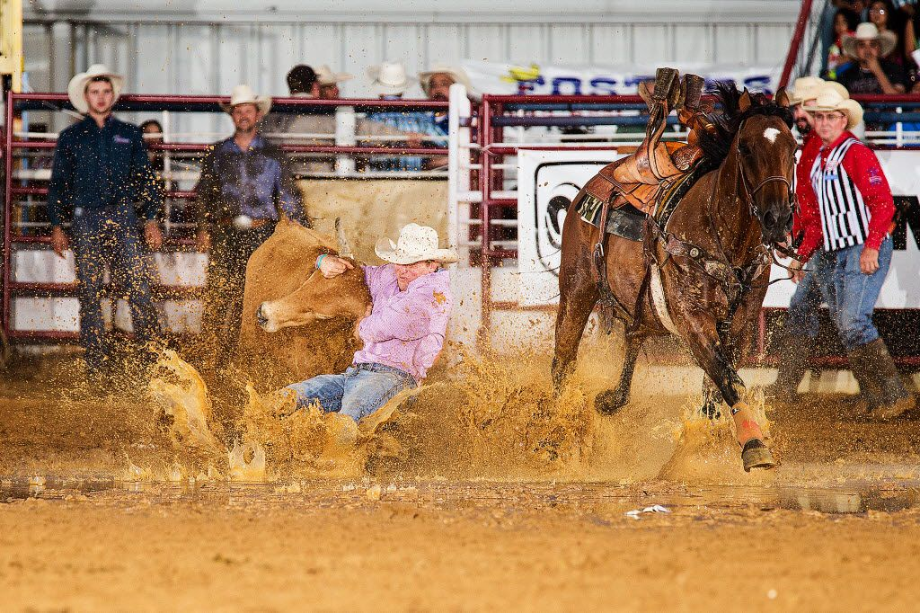 Shane Hadley, of Moorcroft, Wyo., throws his steer in 6.7 seconds for the win Sunday night at the North Texas Fair and Rodeo in Denton.