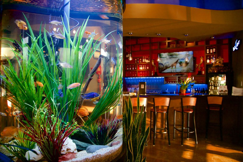 The  waiting area and bar feature a large aquarium.