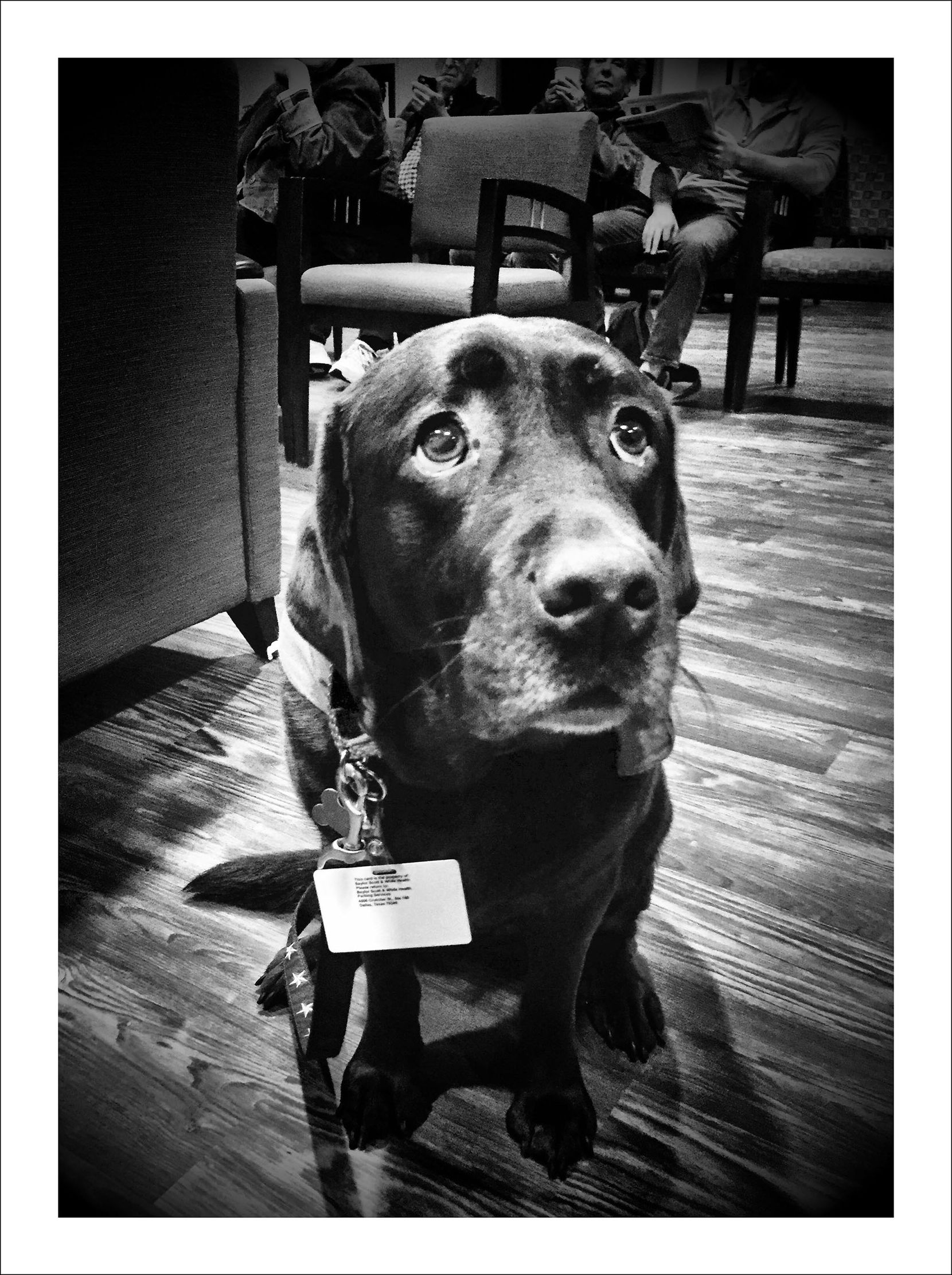 12/12/16 — Therapy dog in the chemotherapy waiting room.