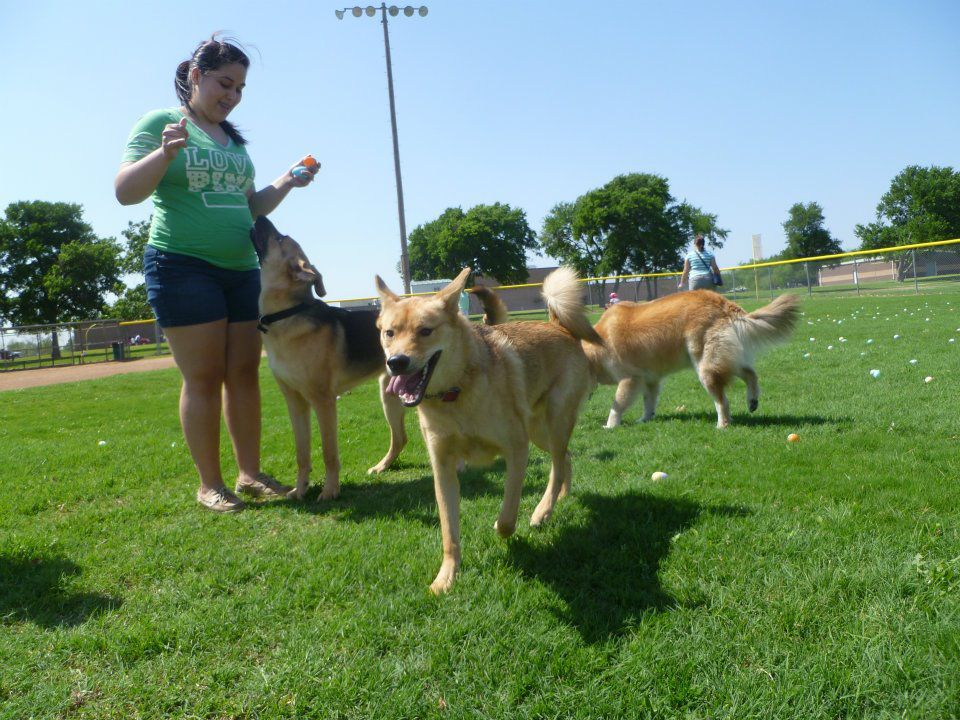 Organizers recommend bringing a basket to Rowlett's annual doggy egg hunt in Herfurth Park.