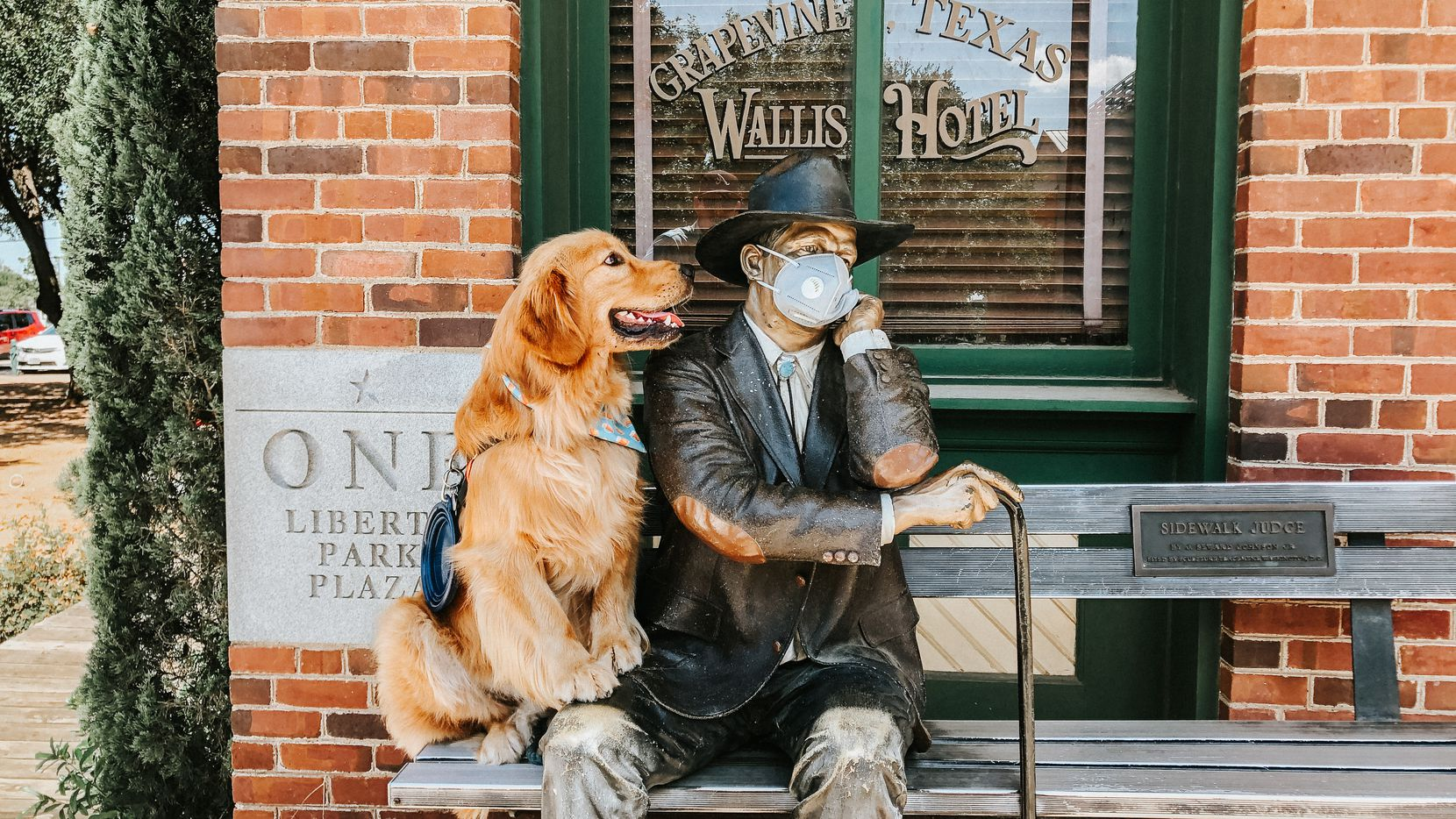Instagram-famous Golden Retriever Harvey sits on the bench next to The Sidewalk Judge sculpture on Grapevine's Main Street. Harvey lives with his owners, Lindsey and Kurt Houck in Grapevine, TX.