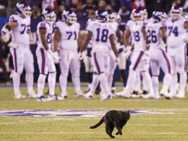 Un gato negro se cruza en medio del partido entre los Dallas Cowboys y los Giants de Nueva York, el 4 de noviembre de 2019 en el MetLife Stadium en Nueva Jersey.