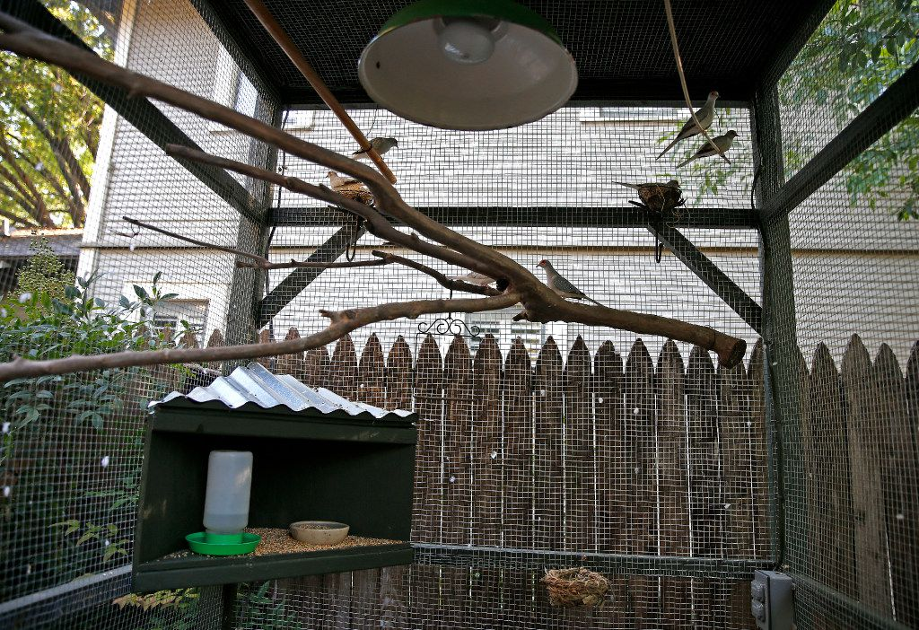The aviary is a large home for Mariana Greene's diamond doves.