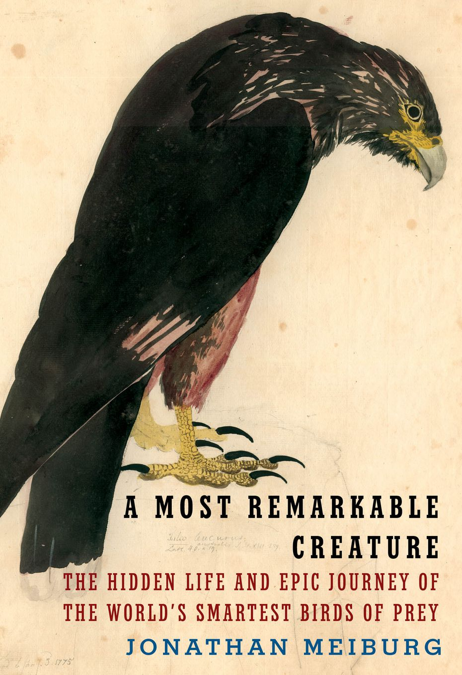 """In """"A Most Remarkable Creature: The Hidden Life and Epic Journey of the World's Smartest Birds of Prey,"""" author Jonathan Meiburg draws on ornithology, geography, paleontology, history and literature, especially the works of British naturalist and novelist William Henry Hudson."""