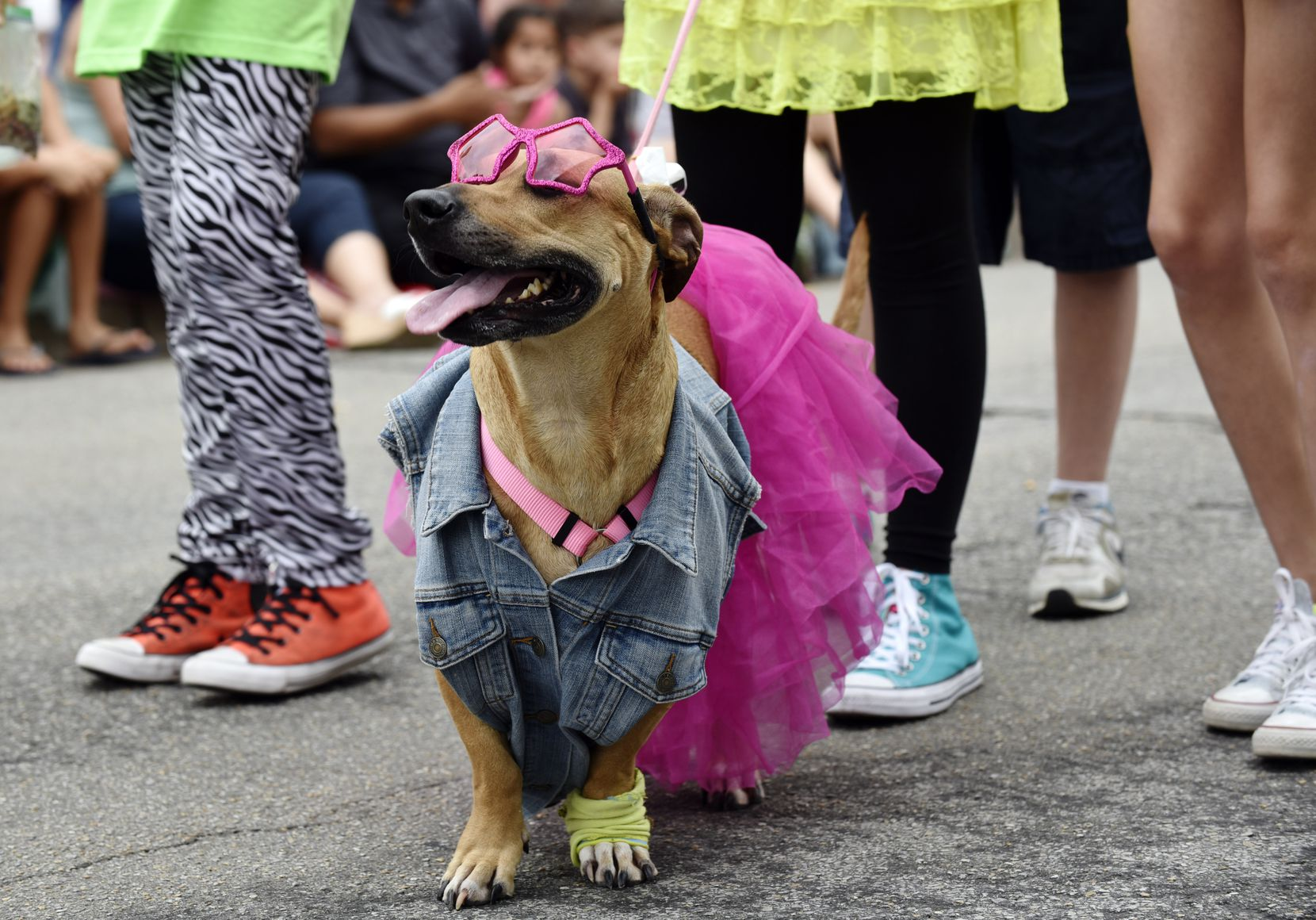 A pup sports '80s clothing during the pooch parade at Easter in Lee Park, hosted by the Lee Park and Arlington Hall Conservancy and the City of Dallas on April 16, 2017.