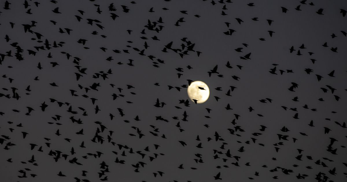 Thousands of birds will die in Dallas tonight unless we do one simple thing