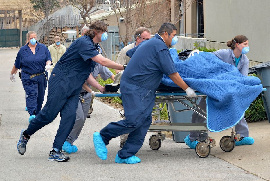 Senior veterinarian Dr. Chris Bonar and animal care staffers transport anesthetized gorilla Subira from the gorilla building to the zoo hospital for an examination, accompanied by consulting anesthesiologist Dr. Robert Lyon.