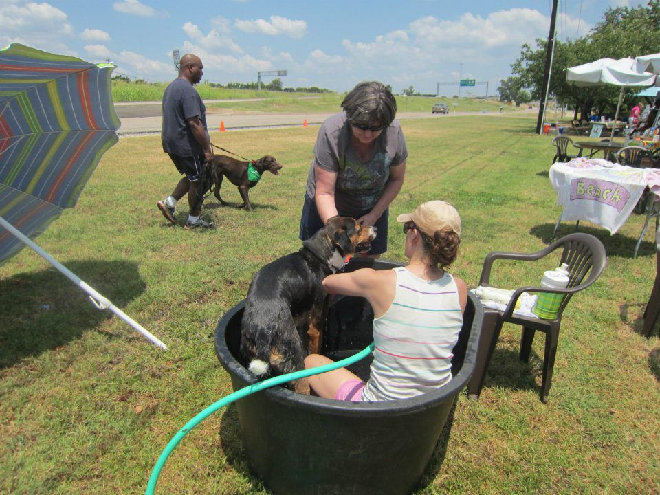 The annual Pooch Pool Party includes baths for donations. (Marshall Grain)