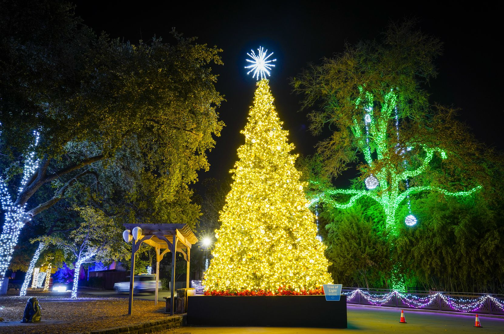 Motorists pass a large Christmas tree display during Dallas Zoo Lights on Wednesday, Nov. 18, 2020, in Dallas. The Dallas Zoo?s display of one million lights and silk-covered, animal-shaped, lanterns is presented as a drive-through this year.  (Smiley N. Pool/The Dallas Morning News)