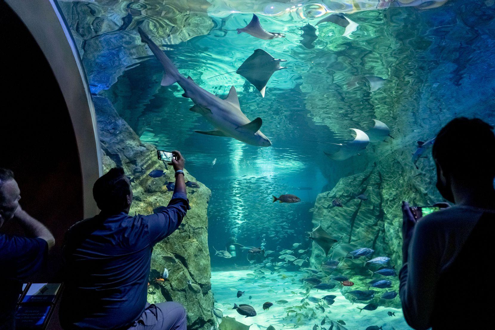 Dallas City Council member Adam Bazaldua views the shark canyon exhibit during a tour of St. Louis Aquarium at Union Station on Wednesday.