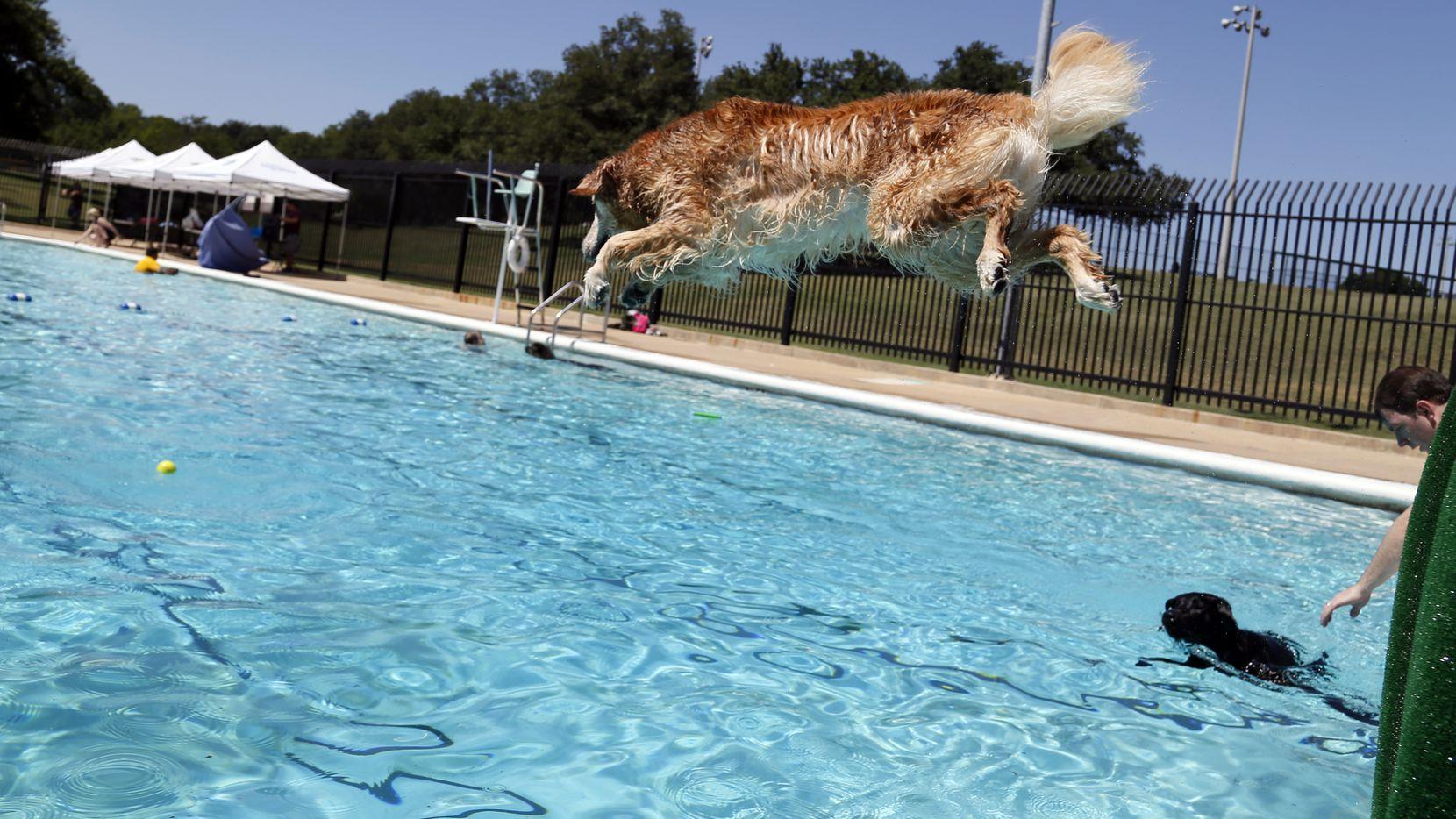 Los perros tiene una oportunidad de disfrutar el fin del verano en Dog Days of Denton este fin de semana.