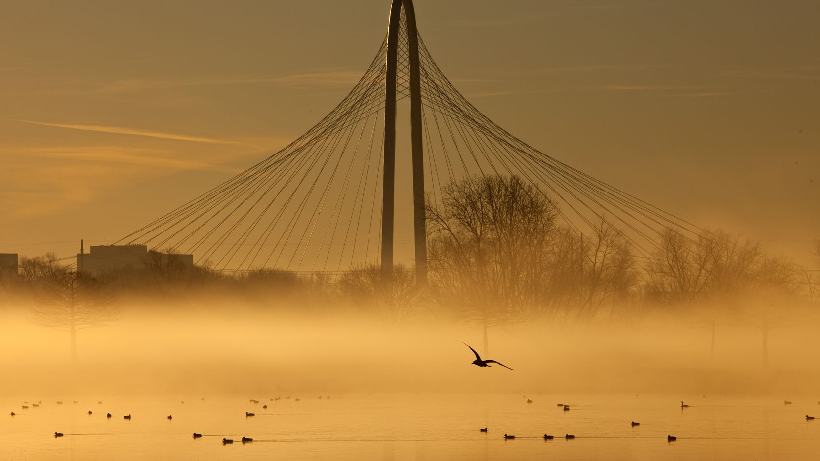 Spanning the Trinity River between downtown and West Dallas, the Margaret Hunt Hill Bridge is seen through the fog with the rising sun, January 11, 2012.  World-renowned architect Santiago Calatrava is designed the bridge. (Tom Fox/The Dallas Morning News)