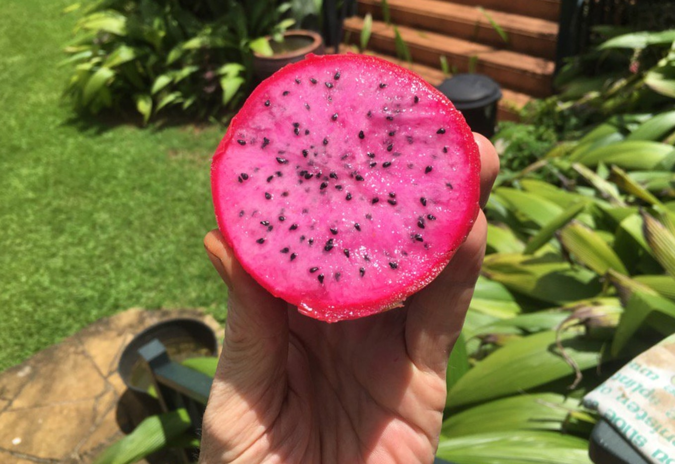 Kevin palms a Dragon Fruit, which sort of resembles a pink kiwi on the inside.