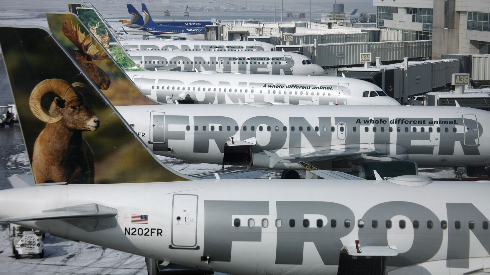 Frontier Airlines jets sit stacked up at gates along the A concourse at Denver International Airport.