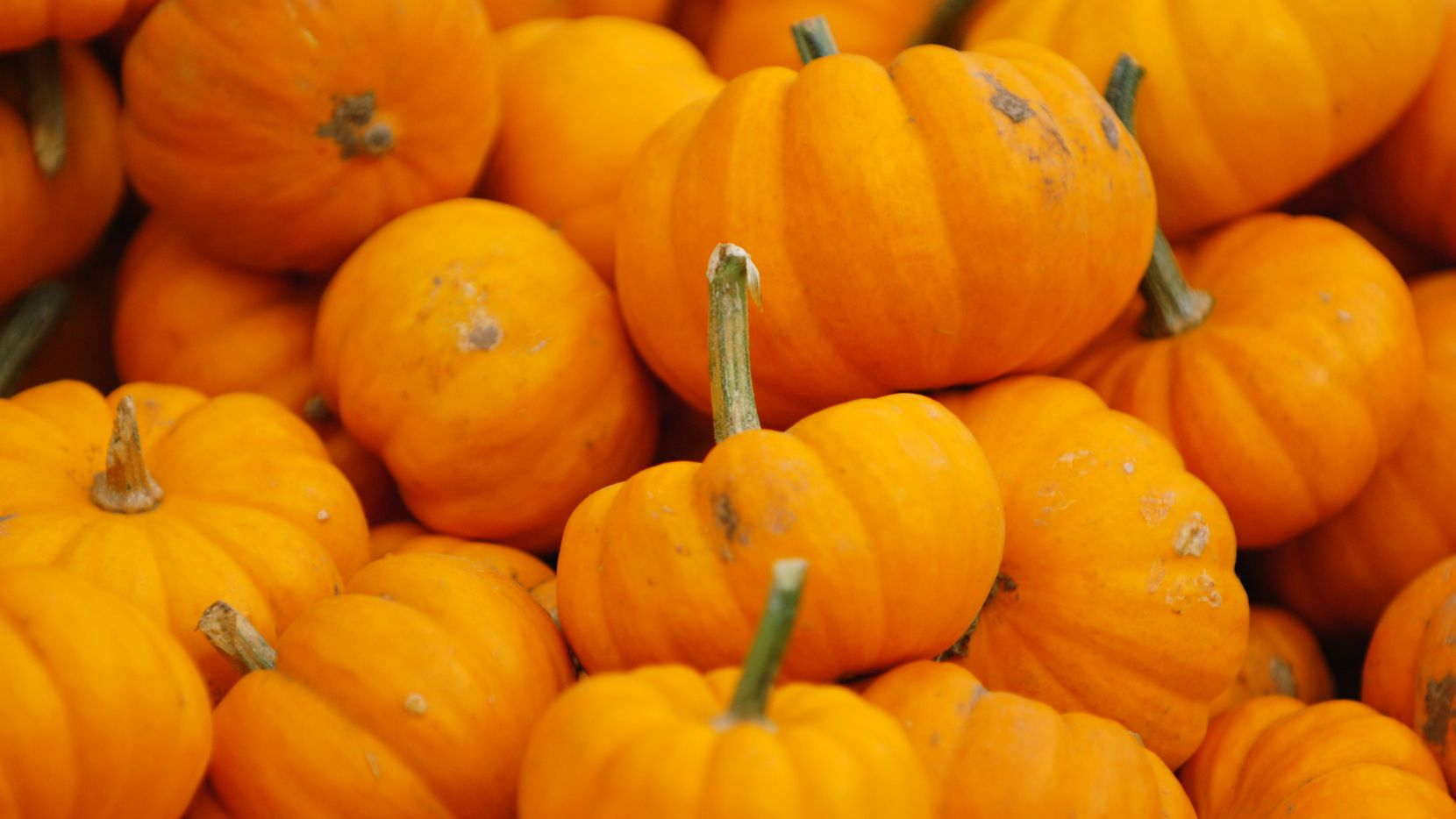 A trough of mini pumpkins for sale at the Flower Mound Pumpkin Patch
