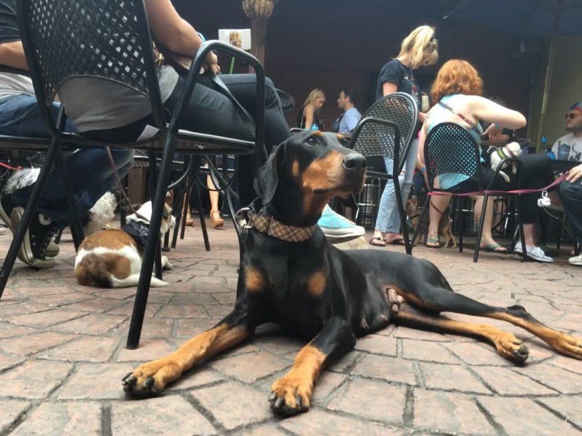 This year's Pup Crawl has seven stops, including Twilite Lounge.