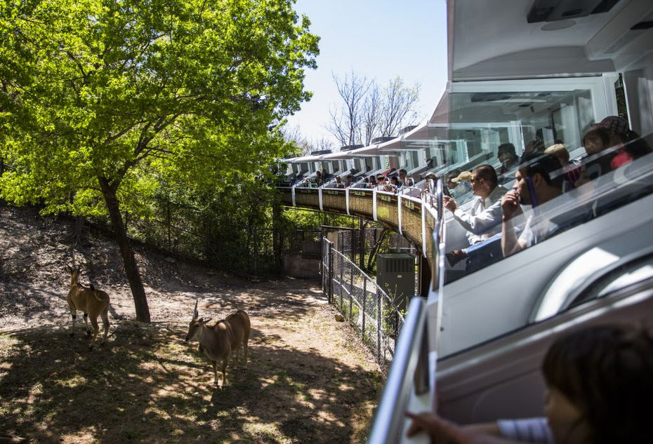 People view animals from air-conditioned cars during a preview ride of the Dallas Zoo's renovated monorail on Thursday, March 24, 2016 in Dallas. The monorail has been closed since 2014 when it stalled, trapping people on the tracks. (Ashley Landis/The Dallas Morning News)