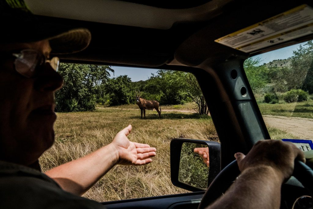 Buck Watson points out a roan on the Ox Ranch in Uvalde, Texas, Aug. 16, 2017.