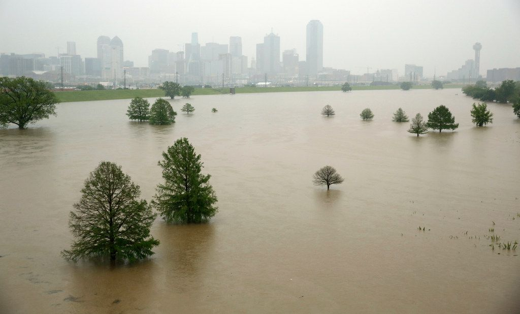 Trees in Trammell Crow Park are surrounded by high water in the swollen Trinity River bottoms near Sylvan Ave. in Dallas, April 24, 2019.