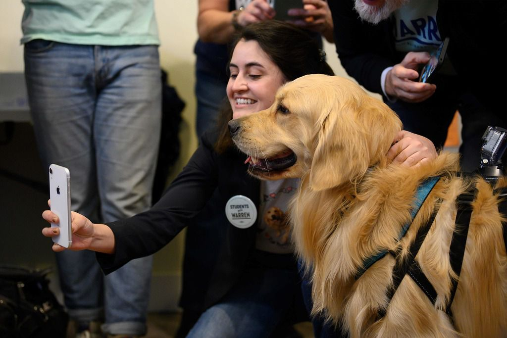 Volunteers and supporters pet Bailey, Sen. Elizabeth Warren's golden retriever, at her campaign office in Waterloo, Iowa on Jan. 29, 2020.