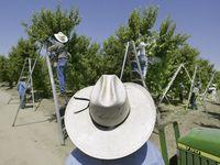 El Departamento de Estado anunció visas adicionales para trabajadores agrícolas, un grupo esencial para enfrentar la crisis del coronavirus.