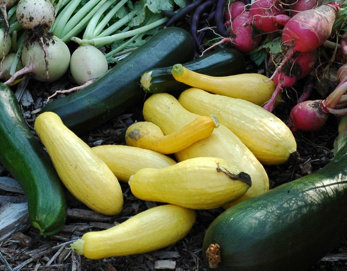 By growing healthy vegetables in your garden, you can cut down on trips to the grocery store.