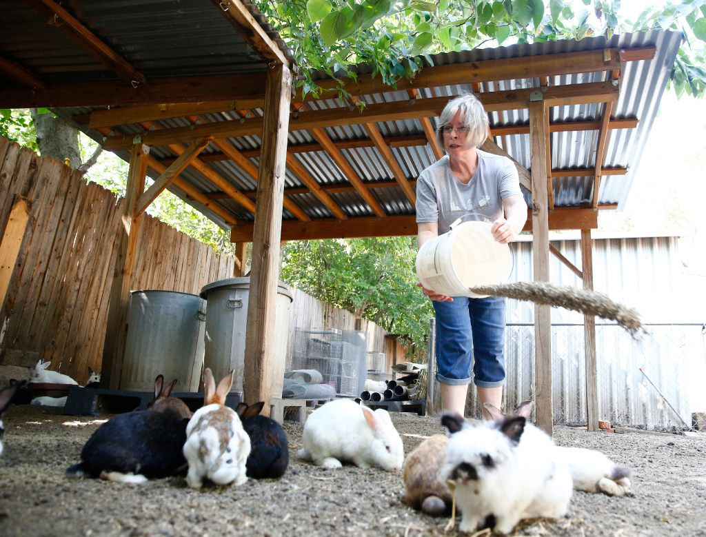 Diana Leggett, feeding her outdoor colony, has a reputation as a rabbit whisperer and often gets calls from homeowners hoping to hand over an injured bunny.