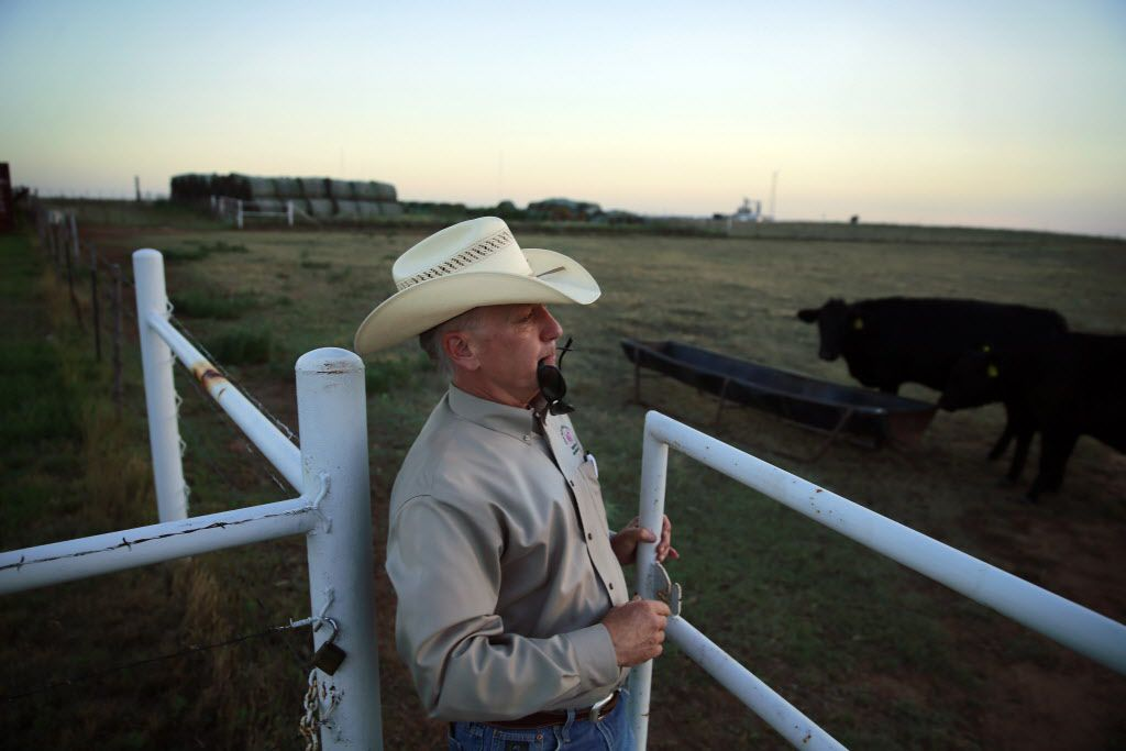 Dean Hawkins, West Texas A&M Agriculture and Natural Sciences acting dean, closes a gate on Alpha X Gamma heifers after making a visit to West Texas A&M University's Nance Ranch east of Canyon, in June 2016.