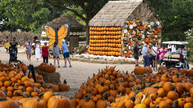 """Un grupo de adultos mayores y otros invitados participaron de la presentación de """"Bugtopia"""", la nueva exposición de otoño del Dallas Arboretum que incluye más de 90,000 calabazas."""