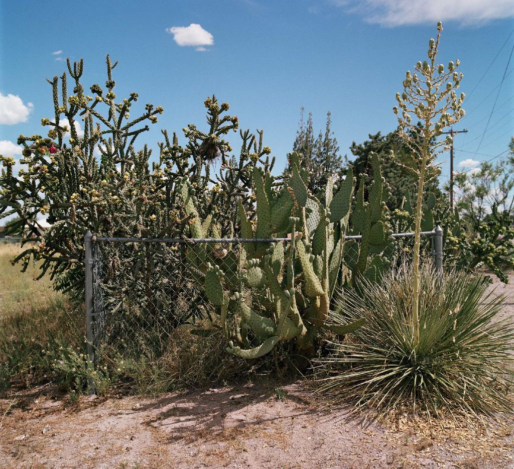 Allison V. Smith, Fenced In. July 2016, Marfa, Texas, chromogenic color photograph courtesy Allison V. Smith and Barry Whistler Gallery in the Flower Power exhibition at NorthPark in Dallas.