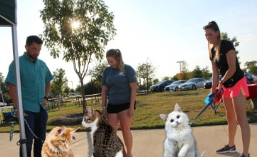 Keller is getting a cat park. (Not really.)
