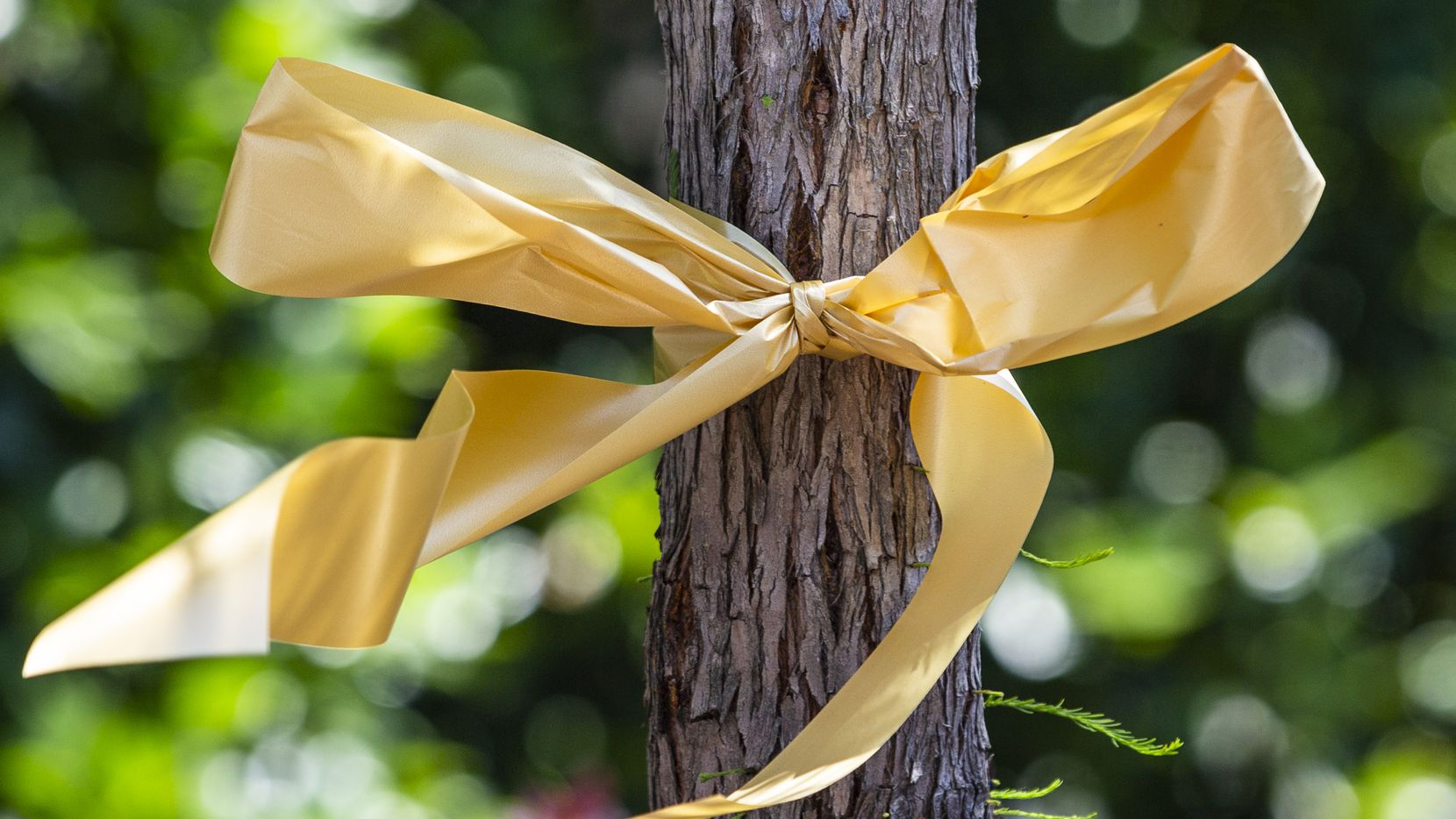 A gold ribbon tied around a tree in front of Ventana by Buckner demonstrates the gesture of goodwill toward seniors and the staffers who spend their workdays with them.