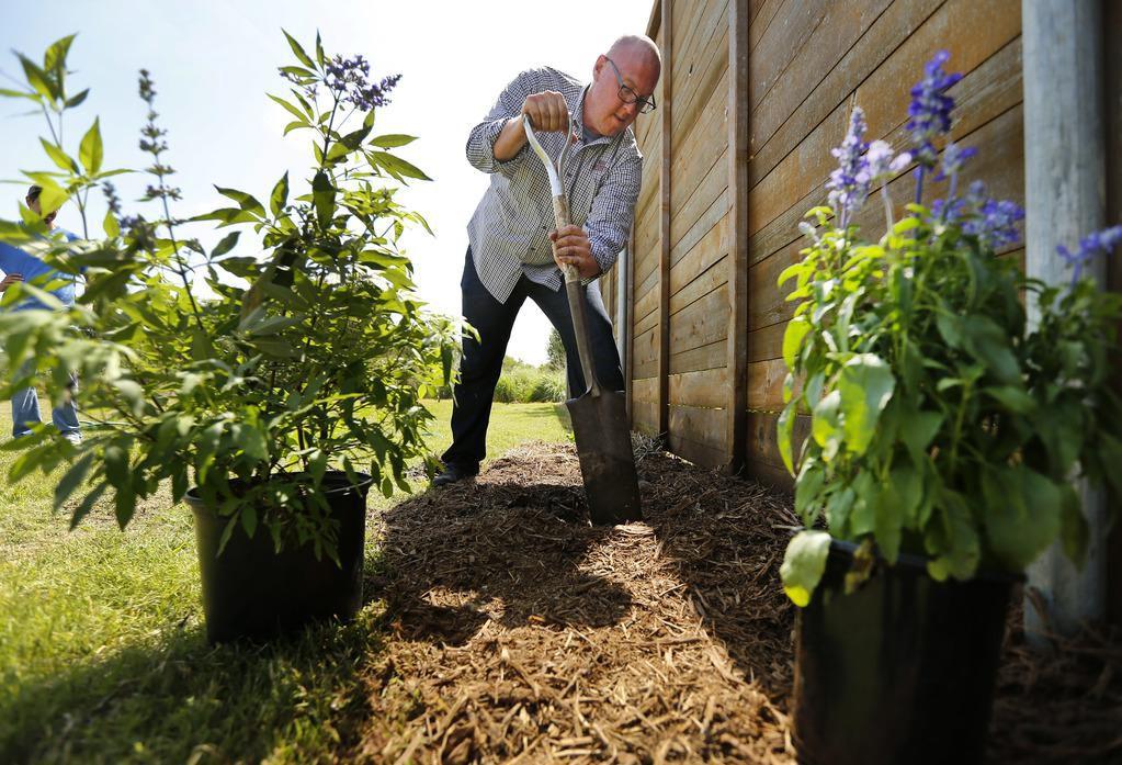 Daniel Cunningham, horticulista del centro de investigación de Texas A&M en Dallas hace un hoyo en la tierra para plantar un árbol de la variedad Vitex (Lila de Texas). (DMN/TOM FOX)