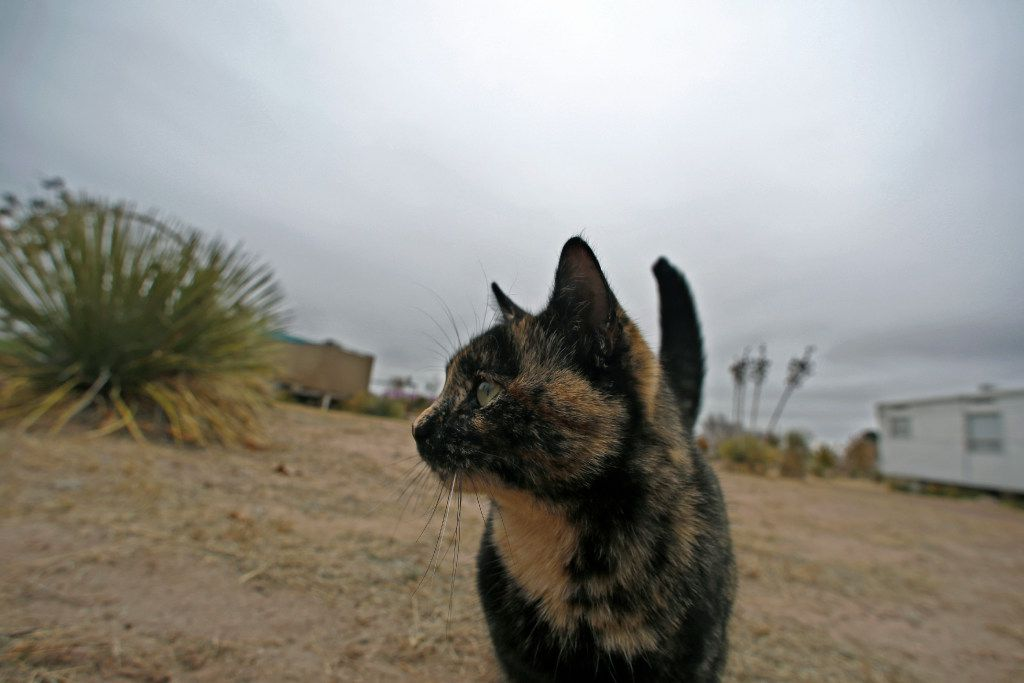 An resident cat wanders the grounds on a cold December day at El Cosmico in Marfa. Look, sometimes cats just do what they want.