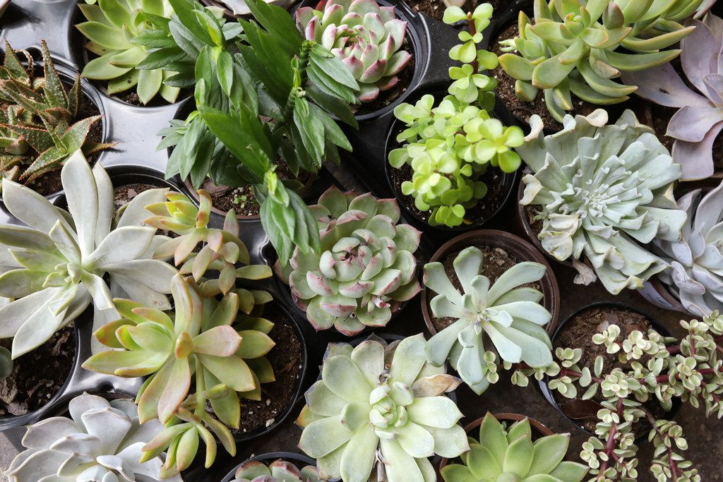 Some of the plants available at Oasis Plant Shop in Dallas, TX, on May 12, 2018. (Jason Janik/Special Contributor)