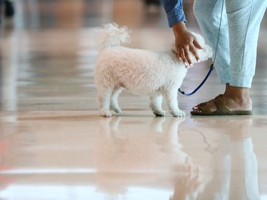 The U.S. Department of Transportation will no longer require airlines to board emotional support animals.